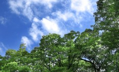 tree_woods_00010